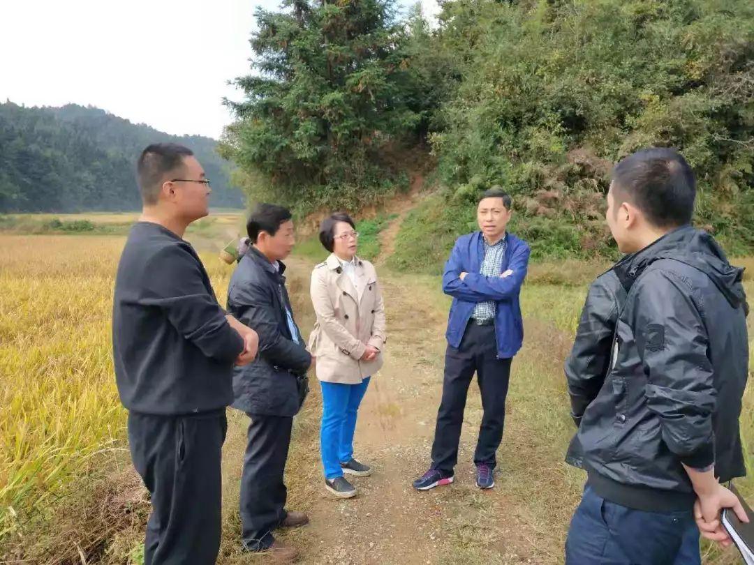 张强副区长调研皖南花猪小产区建设项目 现场协调解决问题
